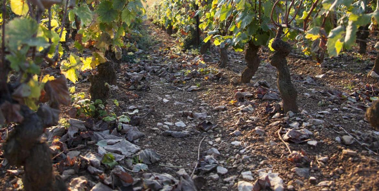 Le Comblanchien terroir des vins de Bourgogne